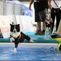 ENCI WINNER 2018 - Splash Dog
