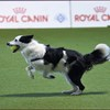 Enci Winner 2018 - - FLYBALL